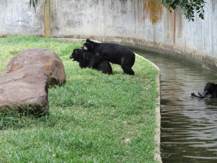 ブンソアイ公園の熊_1