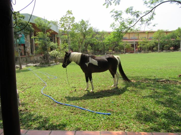 ブンソアイ公園・放牧された馬