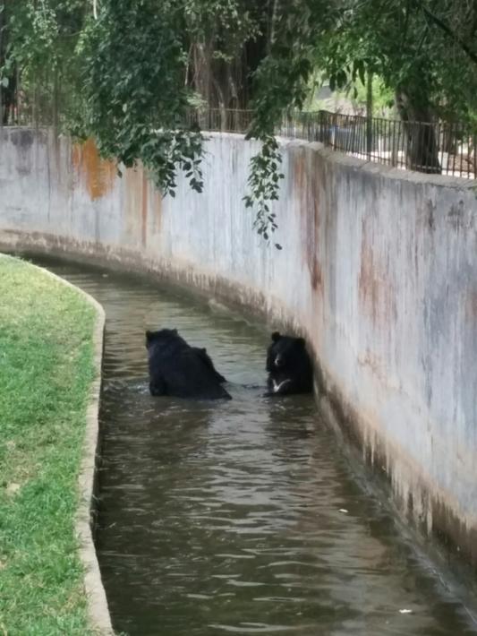 ブンソアイ公園の熊_2